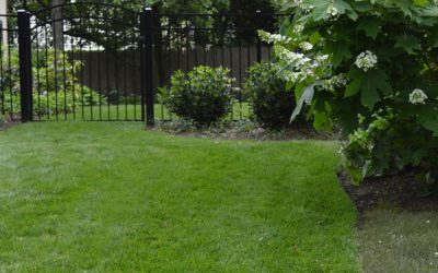 Scorching Heat: Keeping Your Lawn Healthy In The Hottest Months Of Summer
