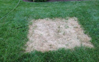What's Up With Your Lawn? Diagnosing Biotic And Abiotic Stress Factors