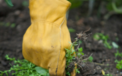 Spring Weeds Are Here. Are You Prepared?