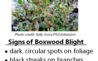 SE PA Update Buxus Blight Drought Conditions