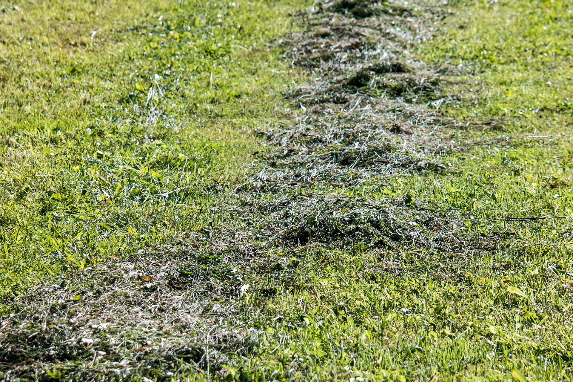 Lawn Clippings Clumping On Lawn